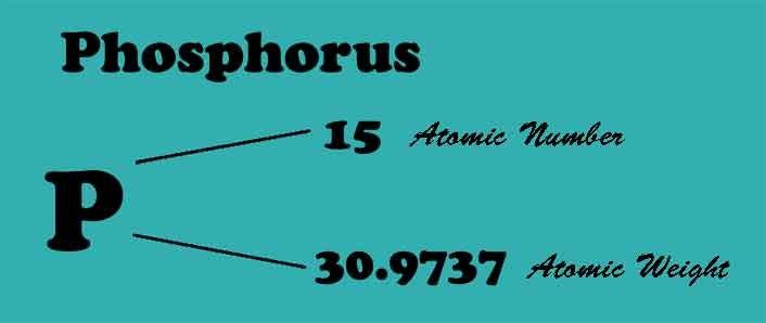 PhosphorourVettoriale_web.jpg